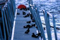 Black Guillemots on a walkway