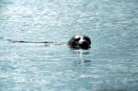 A Common Seal.